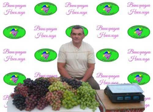 сорта винограда, на рынке с виноградом
