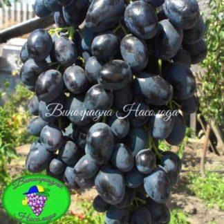 Аленушка Тип. BLECK FINGER, синий, крупный виноград