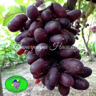 Изюминка - виноград