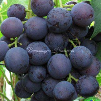 Крошка - виноград