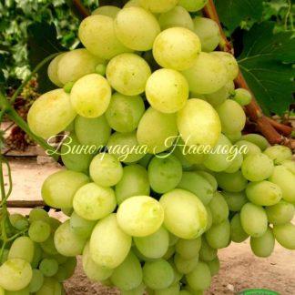 Лора - виноград