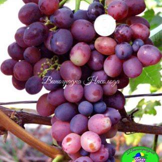 Лелик - виноград