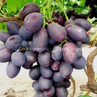 Низина - винограда