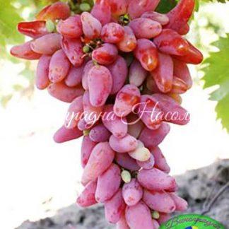 Оригинал - виноград