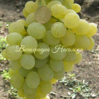 Рафинад - виноград