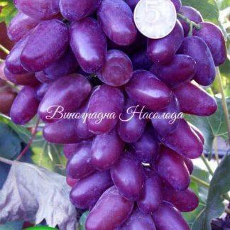Ромео - виноград