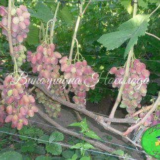 Розалинда - виноград