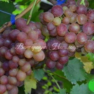 Розмус - виноград