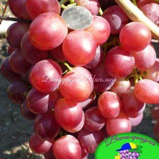 Невеста - виноград