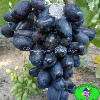 Рембо - виноград